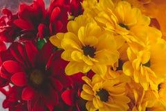 Натюрморт красных и желтых цветков стоковые фото