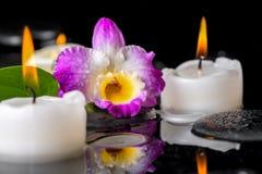 Натюрморт курорта фиолетового dendrobium орхидеи, зеленых лист с росой Стоковые Фото