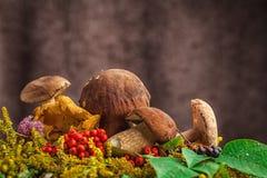 Натюрморт осени грибов стоковая фотография rf