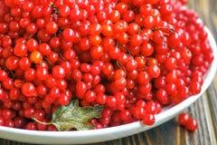 Натюрморт осени с пуками калины Свежие сочные зрелые ягоды калины в белой плите на деревянной предпосылке Селективное foc Стоковое фото RF