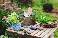 Натюрморт работы сада в лете Цветки, перчатки и инструменты стоцвета на деревянном столе внешнем стоковые изображения rf