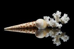 Натюрморт 2 раковин моря стоковое фото