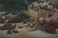 Натюрморт рождества гаек, конусов и ели разветвляет Стоковая Фотография RF