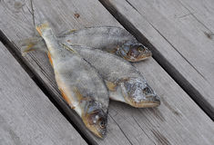 Натюрморт рыб Стоковая Фотография RF