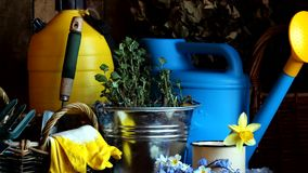 Натюрморт страны с садовыми инструментами и цветками весны сток-видео