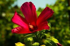 Натюрморт с букетом полевых цветков Стоковое Изображение