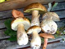 Натюрморт с грибами porcini Стоковое Фото