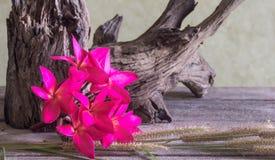 Натюрморт с красным цветком Frangipani (Plumeria) Стоковые Фото