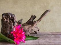 Натюрморт с красным цветком Frangipani (Plumeria) Стоковые Изображения