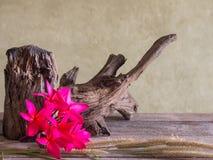 Натюрморт с красным цветком Frangipani (Plumeria) Стоковые Изображения RF