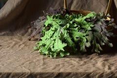 Натюрморт с листовой капустой листьев красной русской стоковые фотографии rf