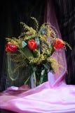 Натюрморт с мимозой красного желтого цвета тюльпанов пахучей Стоковые Фото