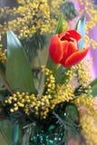 Натюрморт с мимозой красного желтого цвета тюльпанов пахучей Стоковые Изображения