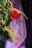 Натюрморт с мимозой красного желтого цвета тюльпанов пахучей Стоковые Фотографии RF