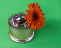 Натюрморт с оранжевым flouwer Стоковая Фотография RF
