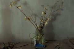 Натюрморт с сухими цветками в стеклянной вазе Стоковая Фотография RF