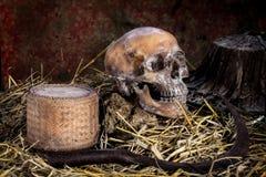 Натюрморт с черепом на соломе и серпе, kratib риса, стоковые изображения