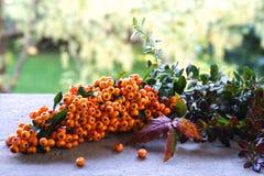 Натюрморт с rhamnoides Hippophae, Hippophae осени, крушина моря Славные целебные ягоды растут на кустах Целебный и стоковые изображения rf