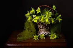 Натюрморт daffodils весны в корзине Стоковые Фото
