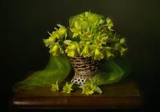 Натюрморт daffodils весны в корзине Стоковая Фотография