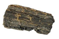 науглероживанная древесина wight части острова Стоковая Фотография
