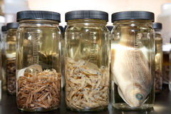 наука образца лаборатории рыб Стоковое Изображение