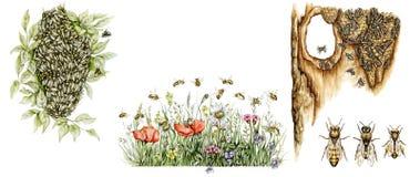 Научная иллюстрация пчел меда Стоковая Фотография