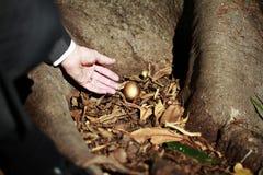 Находка Eggcellent Стоковое Фото