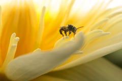 Находить нектар Стоковое Фото