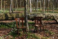 Находящийся за пределами города остатки в древесинах Стоковые Фото