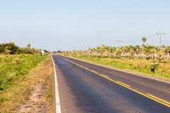 Национальные бега шоссе маршрута 9 через лес ладони и травы саванны Chaco парагвайца, Парагвая Д-р Nacional Numero 9 Ruta стоковая фотография