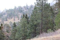 Национальный лес Анджелеса стоковое изображение
