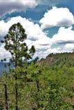 Национальный лес апаша-Sitgreaves, Аризона, Соединенные Штаты Стоковое Изображение