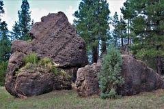 Национальный лес апаша-Sitgreaves, Аризона, Соединенные Штаты стоковое фото rf