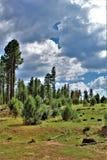 Национальный лес апаша-Sitgreaves, дорога Управления лесным хозяйством 51, Аризона, Соединенные Штаты стоковые изображения rf