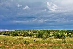 Национальный лес апаша-Sitgreaves, дорога Управления лесным хозяйством 51, Аризона, Соединенные Штаты Стоковые Фото