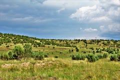 Национальный лес апаша-Sitgreaves, дорога Управления лесным хозяйством 51, Аризона, Соединенные Штаты Стоковое Изображение RF