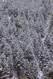 Национальный лес Вайоминг Bridger Teton Стоковое Фото