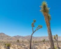 Национальный лес дерева Иешуа - ландшафт парка который содержит пустыню, кустарники, юкку, и деревья Иешуа стоковое фото rf