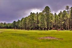Национальный лес Coconino, национальный лес Соединенных Штатов, Соединенные Штаты стоковые фото