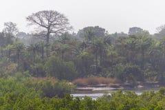 Национальный лес Makasutu в Гамбии стоковые фото