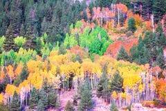 Национальный лес Tahoe осенью стоковые изображения rf