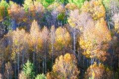 Национальный лес Tahoe осенью стоковое изображение