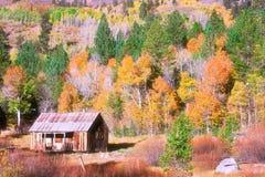 Национальный лес Tahoe осенью стоковые фото