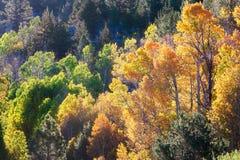 Национальный лес Tahoe осенью стоковые изображения