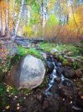 Национальный лес Tahoe осенью стоковое фото