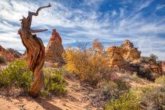 Национальный монумент Аризоны ландшафта пустыни белый карманный стоковое изображение rf