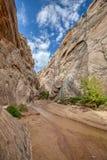 Национальный монумент парадной лестницы Canyon Road хлопока каньона Hackberry стоковые изображения
