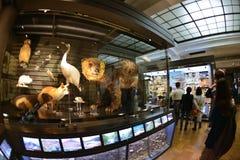 Национальный музей природы и науки, токио Стоковое Изображение