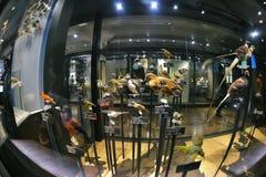 Национальный музей природы и науки, токио Стоковое фото RF